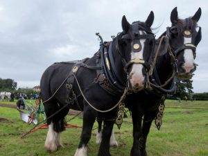 2019 Ploughing Championships